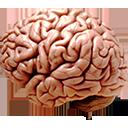 Photorealistic cerebreral cortex